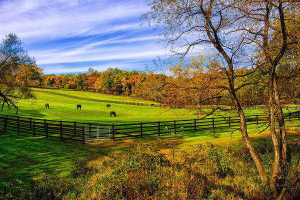 Horse Farm Photograph - Fall Colors by Louis Dallara
