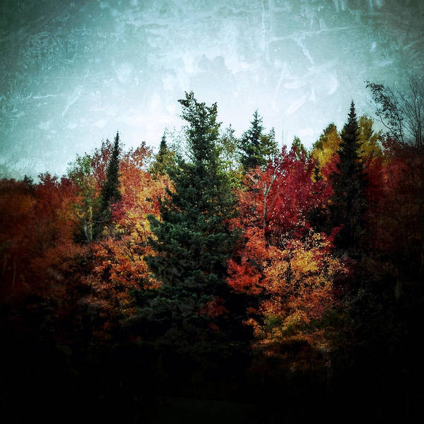 Photograph - Fall Colors by Natasha Marco