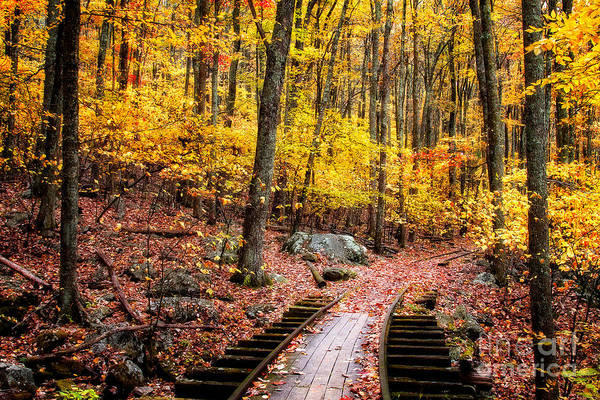 Photograph - Fall Covered Tracks by Deborah Scannell