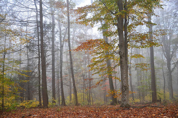 Woodlot Photograph - Fall Morning by Todd Hostetter