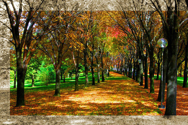 Photograph - Fall Tree Promenade Landscape by Patrick Malon