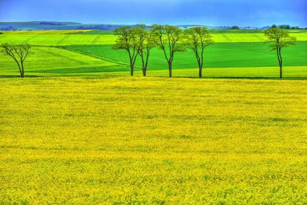 Burgundy Photograph - Fields Of Dreams by Midori Chan