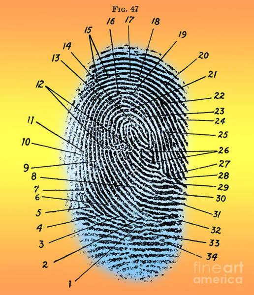 Photograph - Fingerprint Diagram, 1940 by Science Source