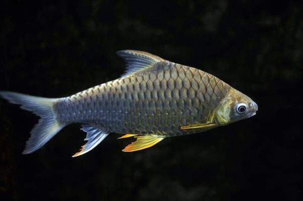 Photograph - Fish by Dragan Kudjerski