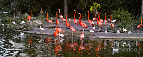 Photograph - Flamingos by Les Palenik