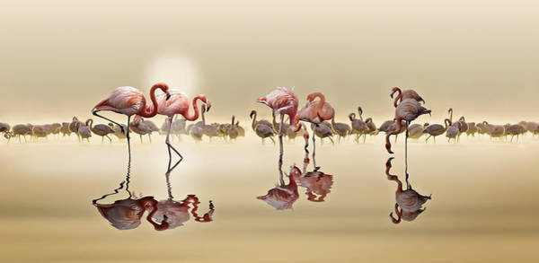 Pair Photograph - Flamingos by Nasser Osman