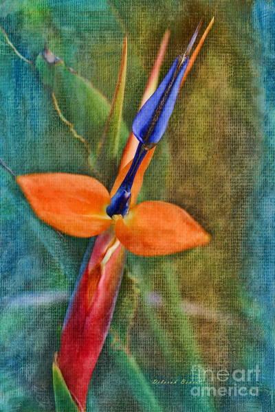 Photograph - Floral Contentment by Deborah Benoit