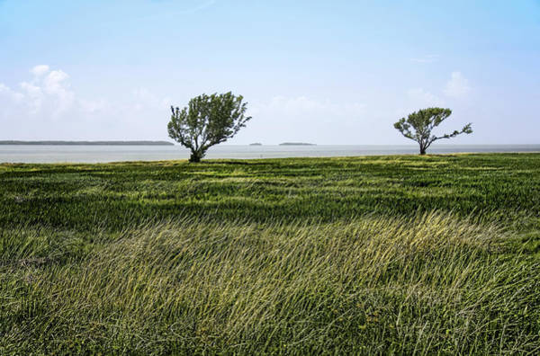 Photograph - Florida Bay Everglades by Rudy Umans