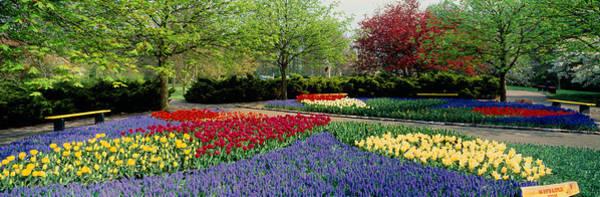 Keukenhof Wall Art - Photograph - Flowers In A Garden, Keukenhof Gardens by Panoramic Images