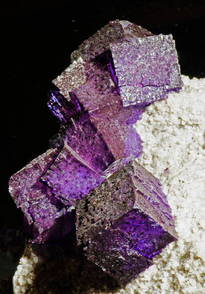 Photograph - Fluorite Crystals by Millard H Sharp