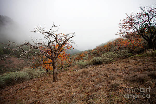 Wall Art - Photograph - Foggy Landscape by Kati Finell