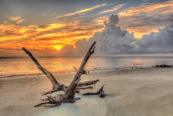 Photograph - Folly Beach Driftwood by Keith Allen