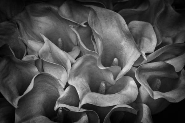 Photograph - For Lenore by Gigi Ebert