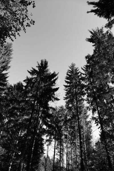Wall Art - Photograph - Forest Black And White by Falko Follert