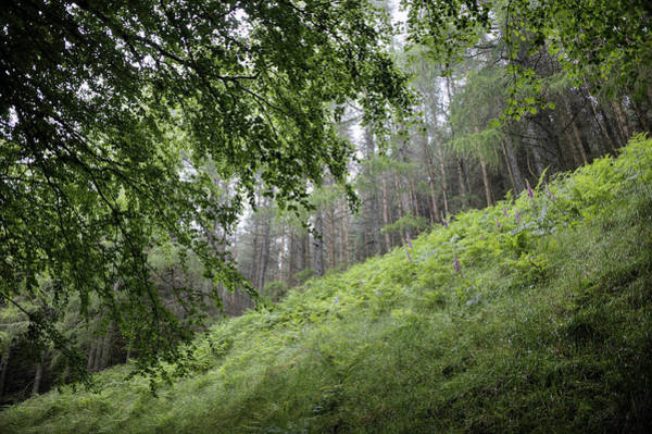 Photograph - Forest by Gouzel -