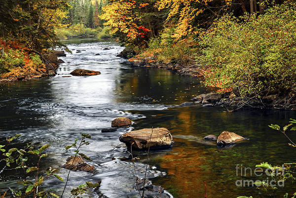 Photograph - Forest River In The Fall by Elena Elisseeva