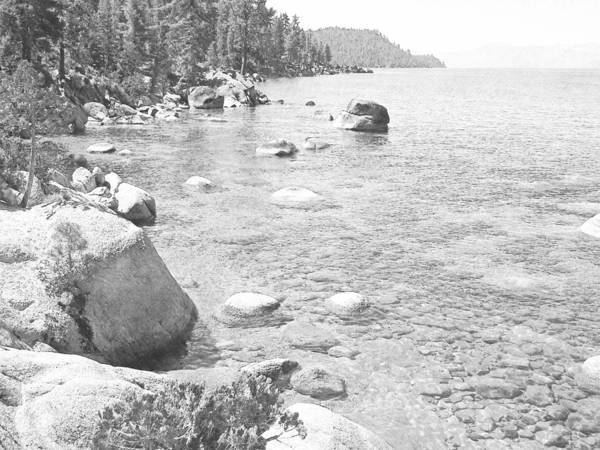 Photograph - Forested Shores Of Lake Tahoe by Frank Wilson