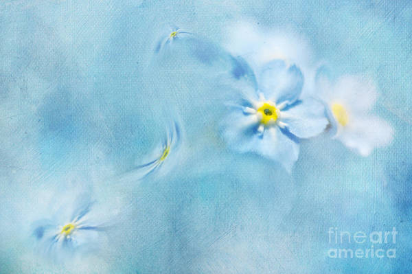 Floral Abstract Mixed Media - Forget-me-not by Svetlana Sewell