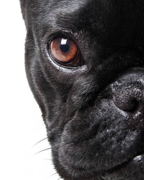 French Bulldog Photograph - French Bulldog by Retales Botijero