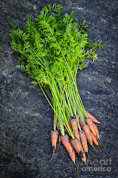 Leafy Greens Photograph - Fresh Carrots From Garden by Elena Elisseeva