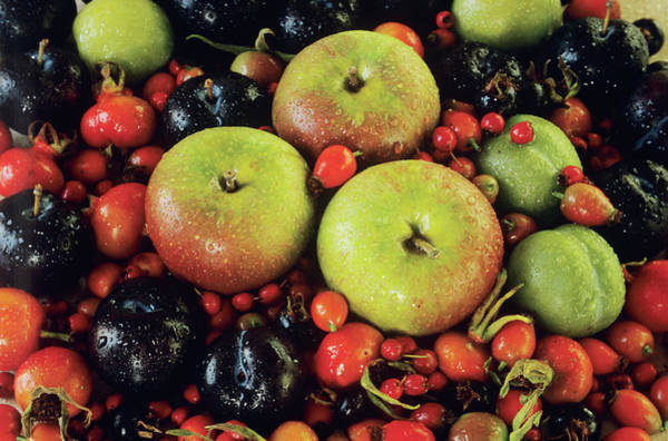 Malus Photograph - Fresh Fruit by Ann Pickford/science Photo Library