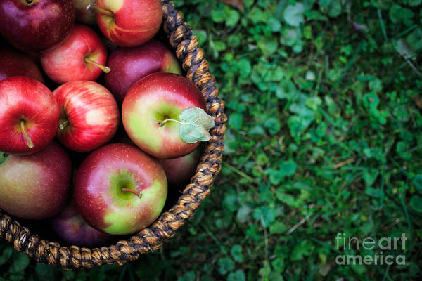 Sin Photograph - Fresh Picked Apples by Edward Fielding