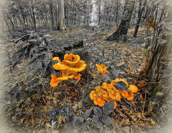 Wall Art - Photograph - Fungus Alley by Keith Hutchings