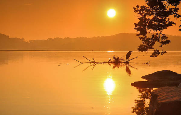 Potomac River Photograph - Golden Morning by Steven Ainsworth