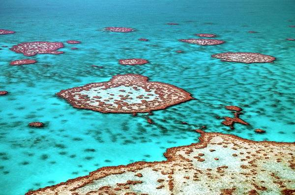 Australian Wildlife Wall Art - Photograph - Great Barrier Reef by Bildagentur-online/mcphoto-schulz