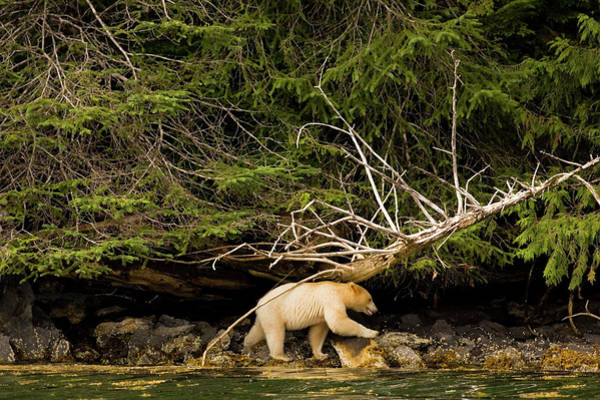 Wall Art - Photograph - Great Bear Rainforest, British Columbia by Carl D. Walsh
