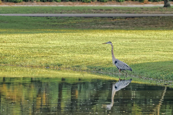 Photograph - Great Blue Heron by Peter Lakomy