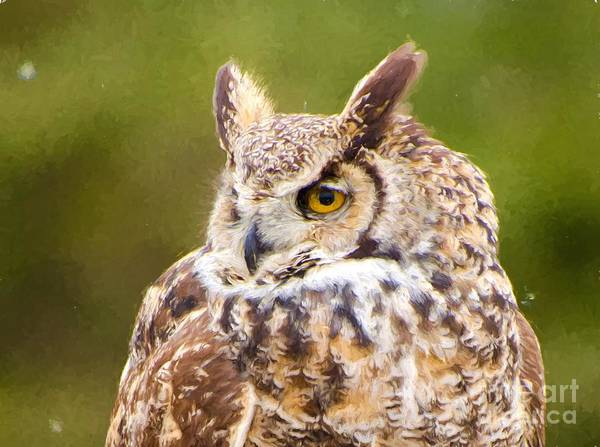Photograph - Great Horned Owl by Les Palenik