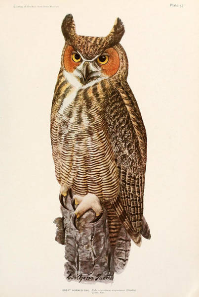 Stump Painting - Great Horned Owl by Dreyer Wildlife Print Collections