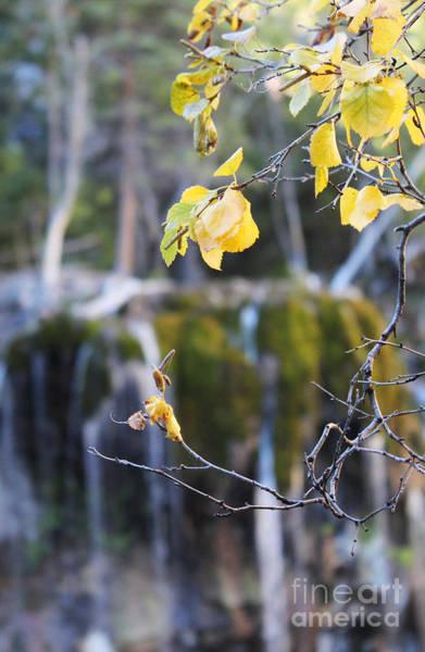 Photograph - Hanging Lake by Kate Avery