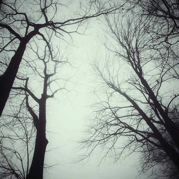 Photograph - Haunted by Natasha Marco