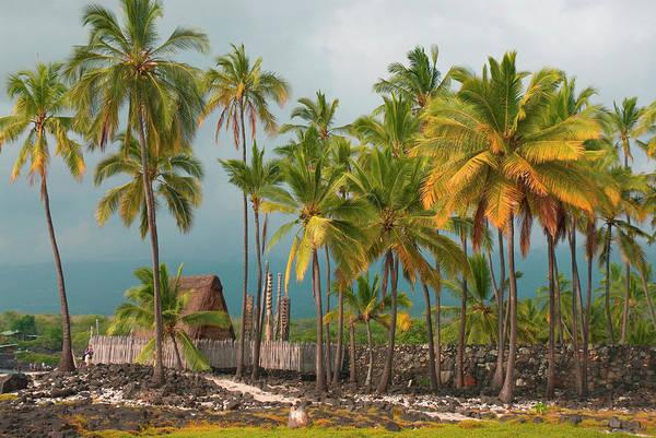Polynesian Photograph - Hawaii, Big Island, South Kona by Inger Hogstrom