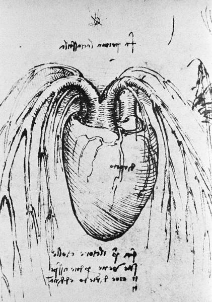 Photograph - Heart Anatomy by Science Photo Library