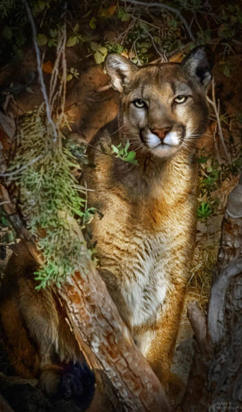 Photograph - Hiding by Elaine Malott