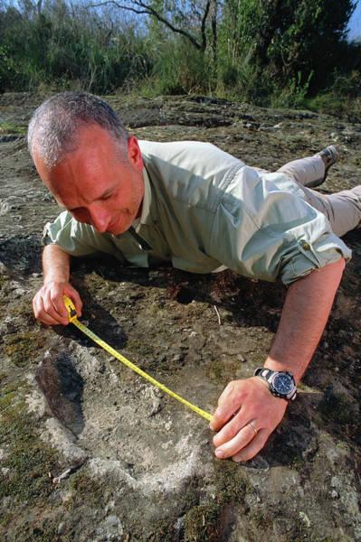 Impression Photograph - Homo Erectus Tracks by Mauro Fermariello/science Photo Library