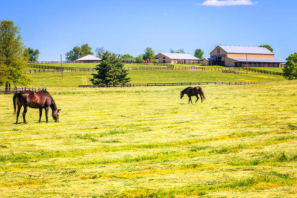 Live Stock Photograph - Horse Farm  by Alexey Stiop