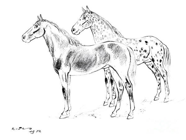 Appaloosa Drawing - Horse Portrait by Kurt Tessmann