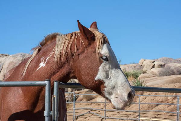 Confidence Photograph - Horse Posing by Zandria Muench Beraldo