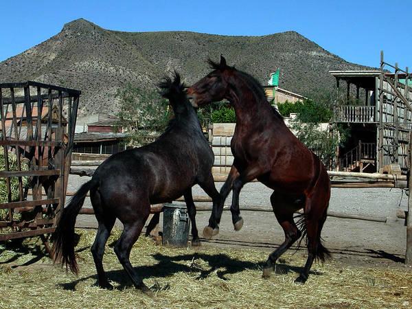 Photograph - 2 Horses In Love Almeria Spain by Colette V Hera  Guggenheim