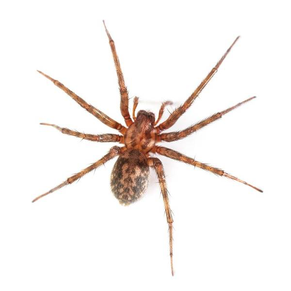 Wall Art - Photograph - House Spider by Science Photo Library