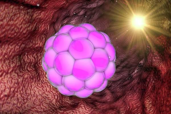 Multi-dimensional Wall Art - Photograph - Human Embryo by Kateryna Kon/science Photo Library