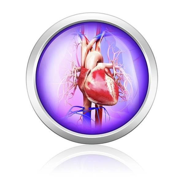 Circulation Wall Art - Photograph - Human Heart by Pixologicstudio