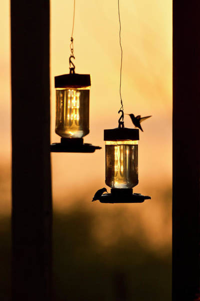 Bird Feeder Photograph - Hummingbirds At Feeder Before Sunrise by Larry Ditto