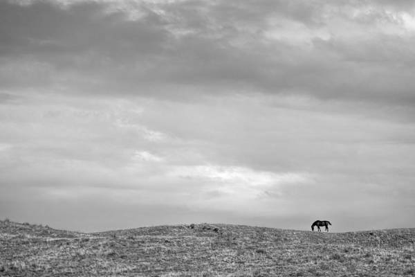 Photograph - I'm A Little Horse Today by Peter Tellone
