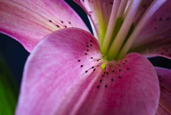 Photograph - In The Pink by Christi Kraft