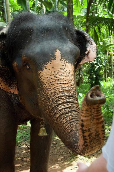 Goa Photograph - India, Goa, Ponda, Curti by Cindy Miller Hopkins